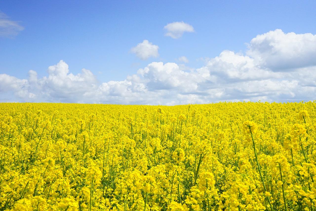 Środki ochrony roślin zwalczanie chwastów w kukurydzy